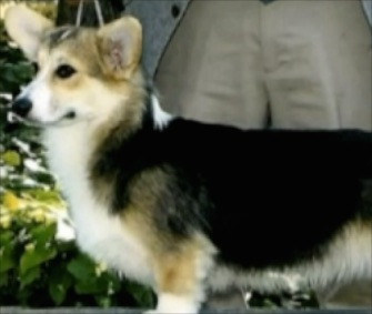 Bethany, a Pembroke Welsh Corgi, will be reunited with her family after mistakenly being put on a flight to Hawaii.