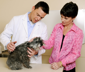 Veterinarian and client