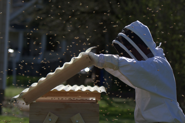 Matt Reed in his beekeeper's suit