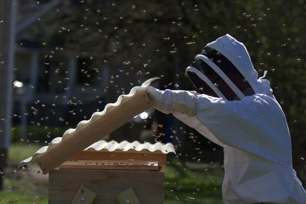 Matt Reed in his beekeeper's suit