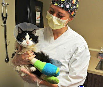 Bruce Almighty has gone through hours of surgery to save his legs after being rescued.