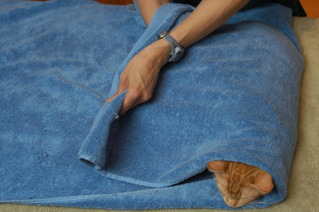 Cat Toweling Step 3