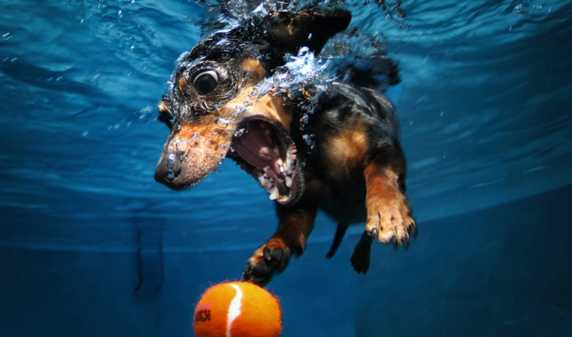 Seth Casteel underwater dog