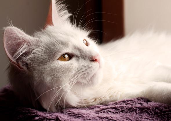 cat thinkstock 179004166 590sm12914 jpg