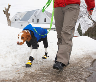 Walking dog in the winter