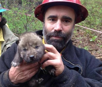 A rescuer holds one of the wolf pups who was saved at the fire line at Alaska's Kenai National Wildlife Refuge.