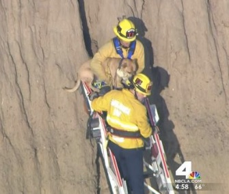 Smoky had to be pulled from a crevice on the side of a cliff after chasing a squirrel Monday.