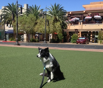 Nessie hangs out at Town Square in Las Vegas.