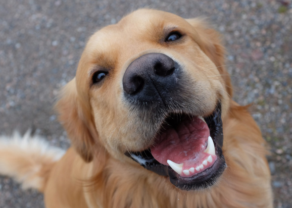 6 Signs Your Dog Loves You