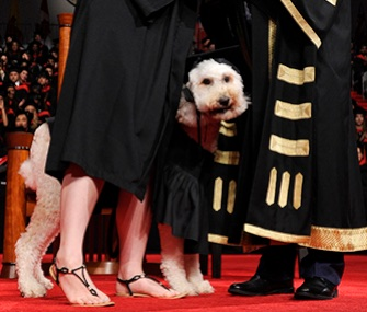 Devon MacPherson's service dog Barkley participated in her graduation ceremony at Toronto's York University.