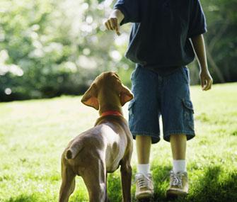 Little Boy Training Dog
