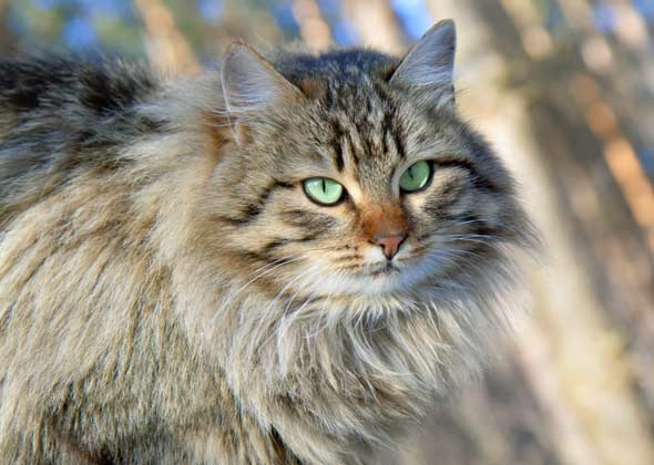 10 Cat Names on the Decline