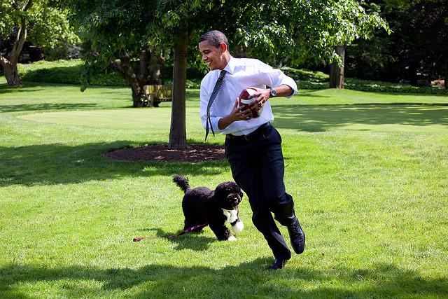 President Obama Bo Obama