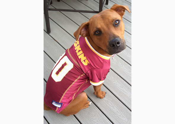 info for bd50a bb72a washington redskins dog jersey