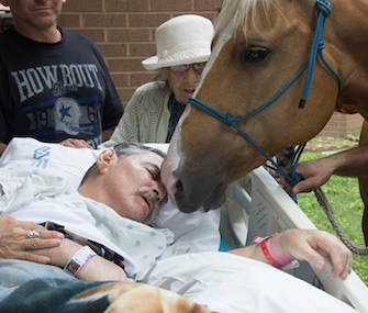 Dying Vietnam veteran Roberto Gonzales got to see his horses one last time at a VA hospital.
