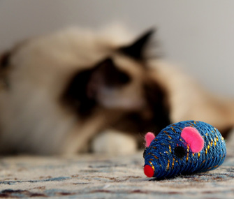 Catnip mouse with cat in background