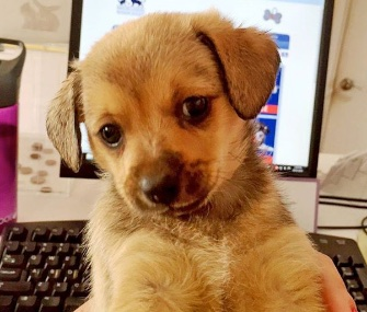 A tiny puppy was found wandering around on the 10th floor of the Grand Hyatt San Diego.
