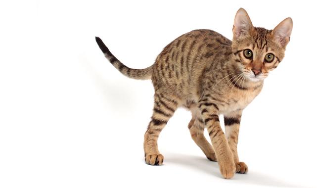 pet carrier large cat