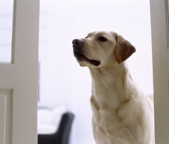 Teach Your Dog To Wait At The Door When Visitors Arrive
