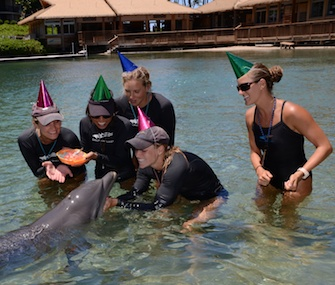 Trainers at Dolphin Quest Hawaii celebrate Lehua's first birthday.