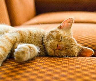 La Anemia en Gatos