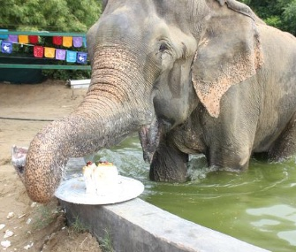 Raju celebrates one year of freedom with a piece of cake, and a swim.