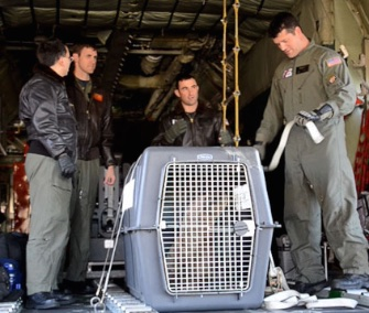 The U.S. Coast Guard transported Leo, an orphaned stellar sea lion pup, from Washington to California this month.