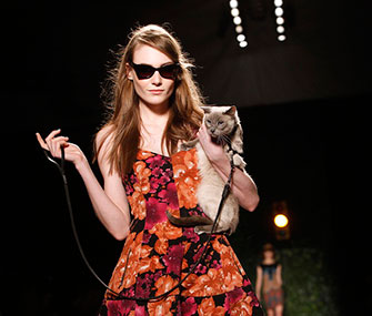 Lily the cat hits the runway at Fashion Week in New York.
