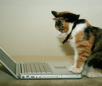 Cat watching laptop
