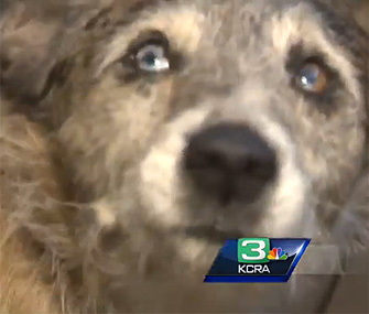 Dog saved from mountain lion