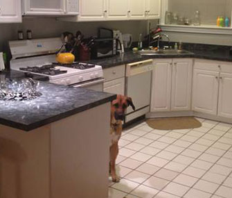 Otis hopped into this picture of the apartment's kitchen.