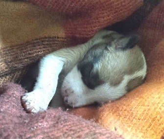 """Miracle"" puppy Autumn was rescued from the trash thanks to a dog who found her."