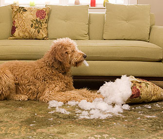 Dog Chewing Sofa Pillow