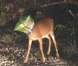 Two sheriff's deputies came to the aid of this Key deer in Florida.