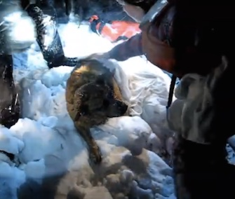 Firefighters in Maine saved Hero the dog from an icy harbor in the early morning hours of Sunday.