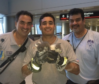 Miami Dade firefighters rescued three kittens from the ceiling at Miami International Airport, and are now looking for homes for them.