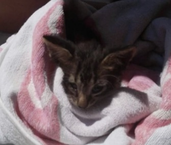The Italian coast guard rescued a drowning kitten from a Sicilian port.