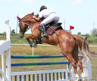 Trivia Tuesday 5 Facts About Olympic Horses