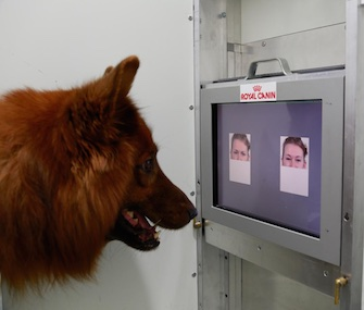 The dogs in the study used screens to identify happy and angry human faces.