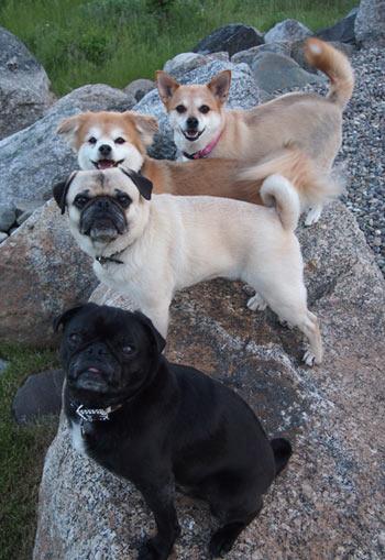 Four Becker Dogs