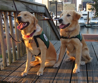Fawn, right, with her sister, Flirt, went to Baltimore Harbor as part of her training with Janet Keeler, a volunteer for The Seeing Eye.
