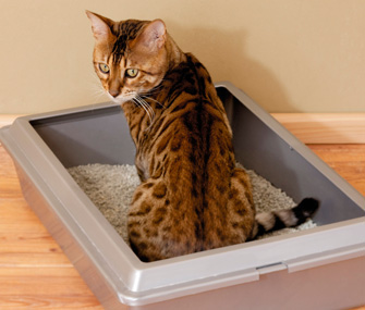 Can I Train an Outdoor Cat to Use a Litterbox?