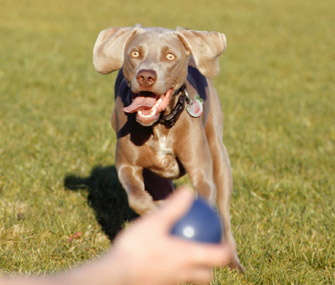 Throwing ball for dog