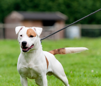 How to Stop Your Dog From Barking and Lunging at Other Dogs