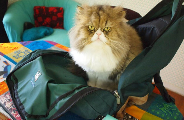 Cat hides in backpack.