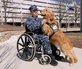 How To Train Service Dogs For Vets