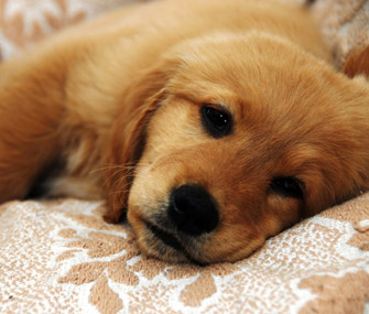 Gastrointestinal Parasites In Pets Preventing And Treating These Bugs