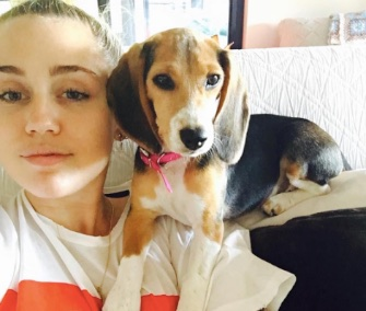 The Beagle Freedom Project shared this photo of Barbie and her new mom, Miley Cyrus, over the weekend.