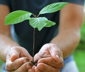 Man planting tree sapling