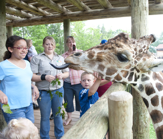 Kids feeding a giraffe at the Fort Wayne Children's Zoo